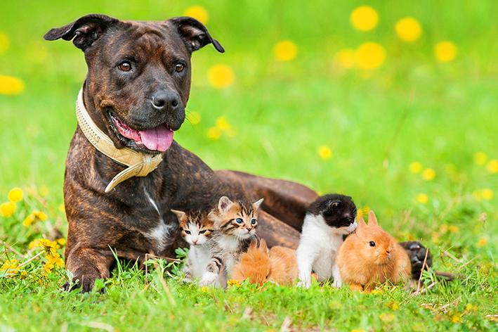 Cachorro e coelhos são animais fofos