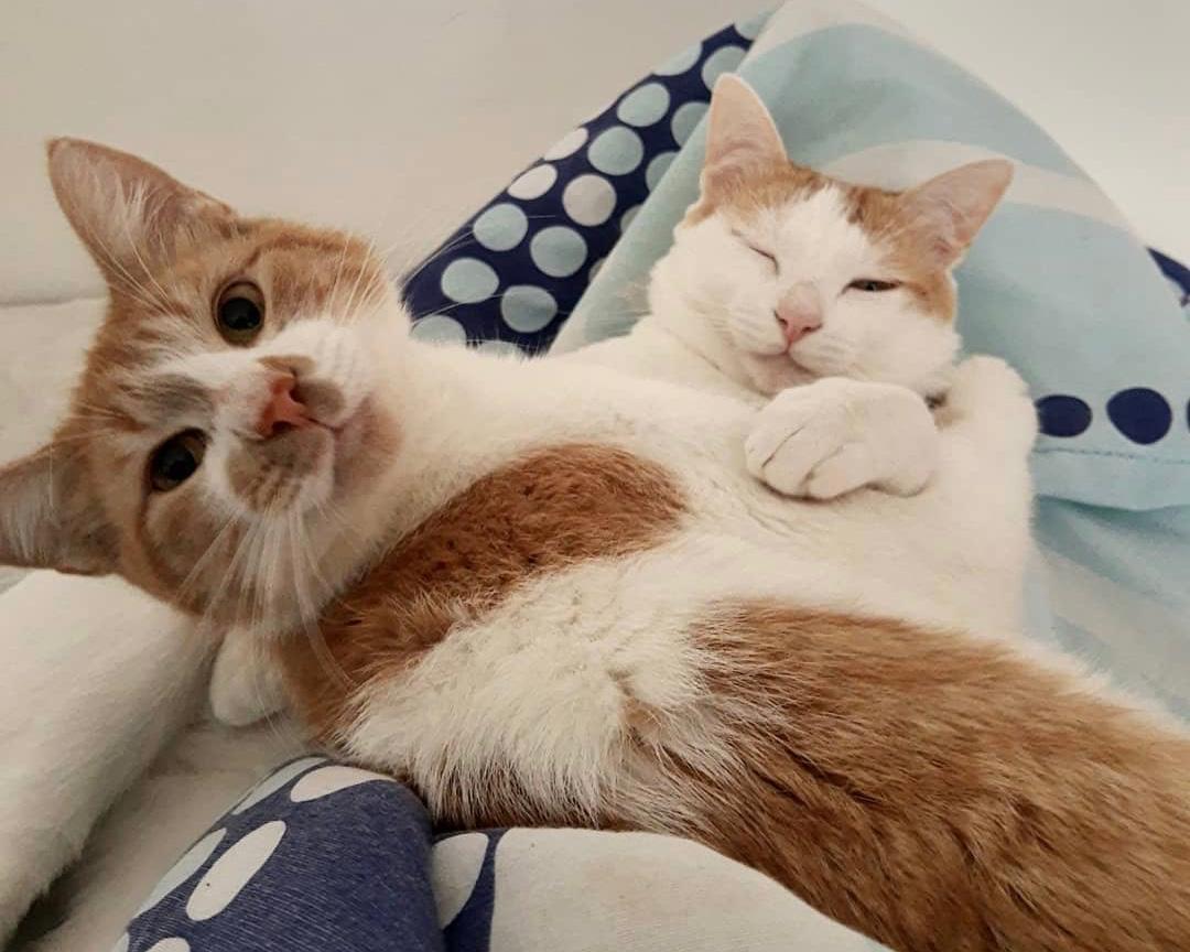 Smith, gato com paralisia, e Apollo, seu irmão