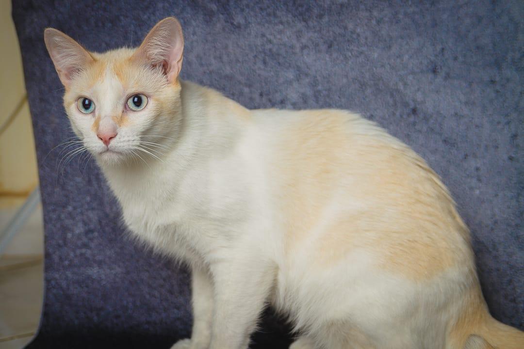 Bobi é um gato branco e é um dos disponíveis para adoção de animais deficientes