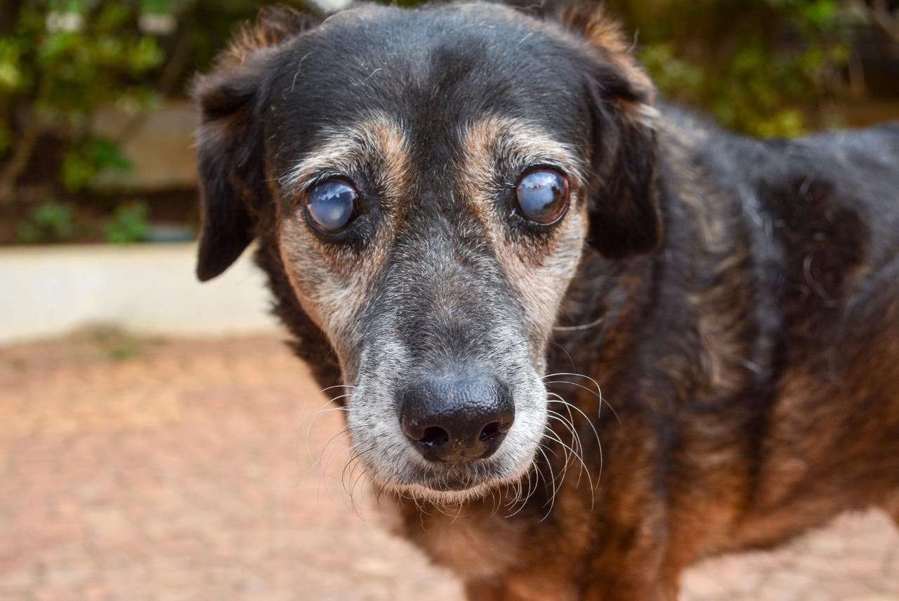 Adoção de animais deficientes como o Seu Madruga que é cego