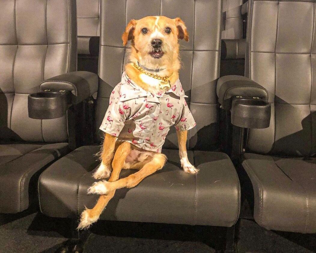 Toco é um cachorro deficiente muito saudável e feliz