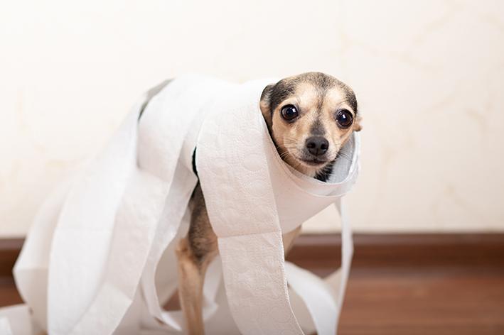 produto para cachorro não fazer xixi no tapete