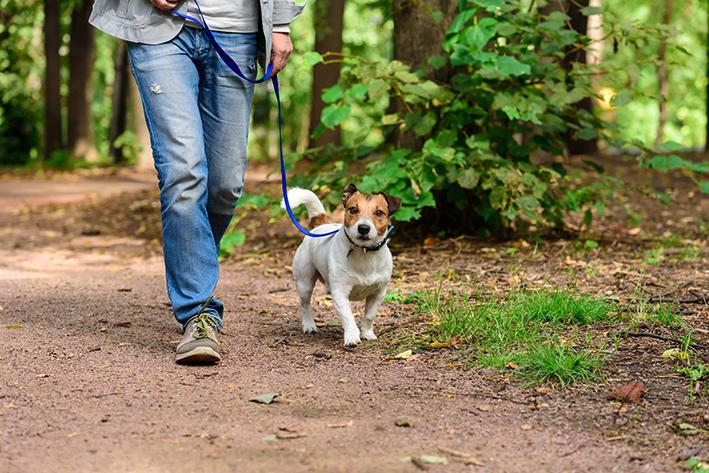 Cachorro passeando com o dono em um parque