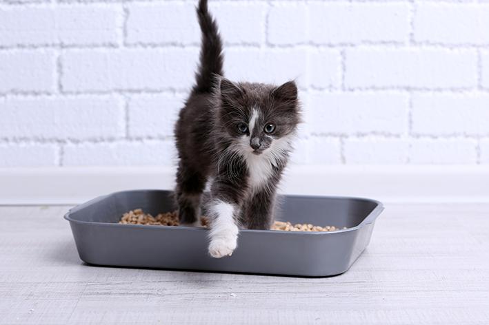 Filhote saindo da caixa de caria para gato