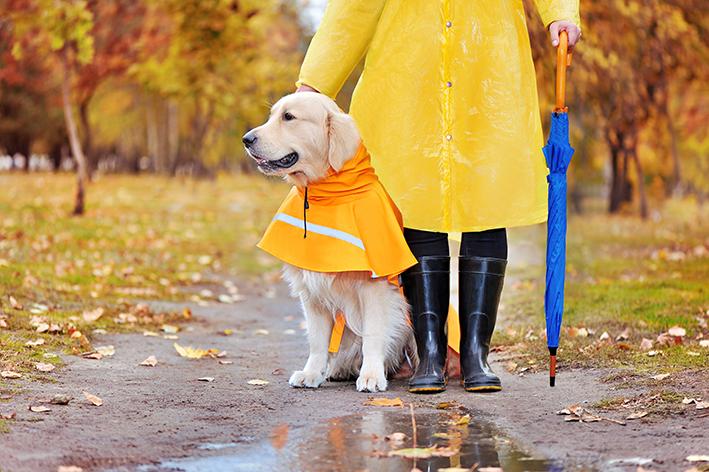 Tipos de capa de chuva para cachorro