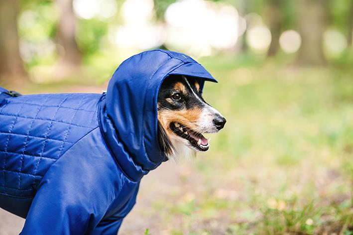 A importância dos passeios para a saúde do cachorro