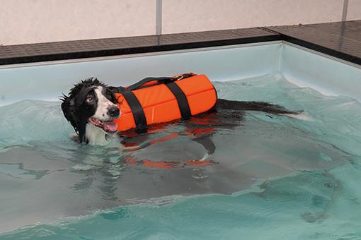 animal fazendo fisioterapia para cachorro na piscina