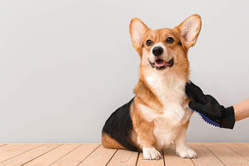 tutor usando shampoo a seco no cachorro