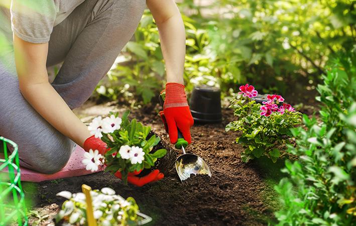 aprenda como fazer um jardim