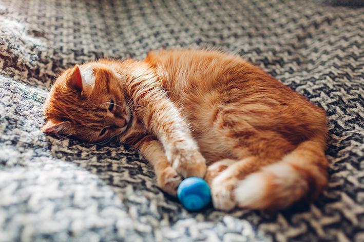 gato pode ficar sozinho