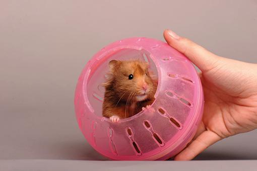 pet dentro de um globo para hamster