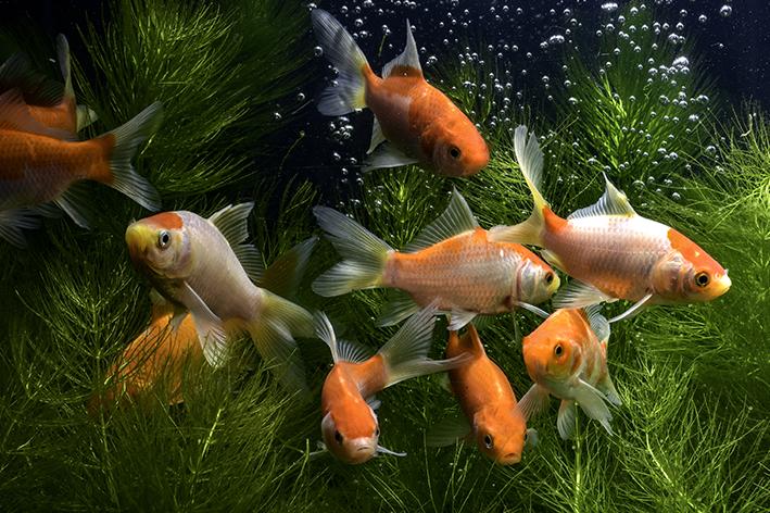 nomes para peixes