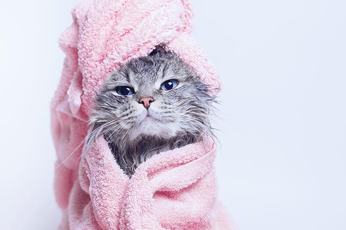 Gato de banho tomado e toalha rosa na cabeça
