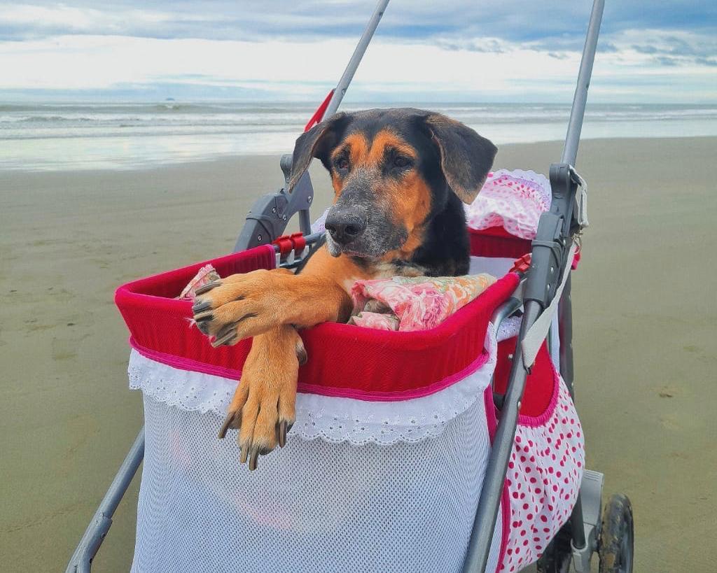 Princesa é uma pet especial no seu carrinho de passeio
