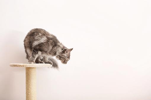 porque o gato é o dono da casa