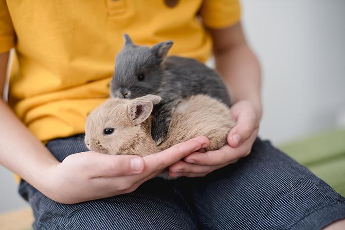 mulher segurando coelho que não cresce comprar coelhos