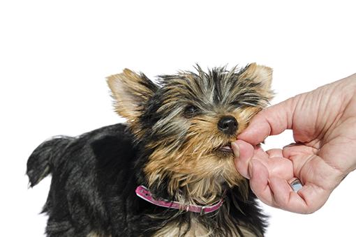 cachorro tomando remédio para enjoo