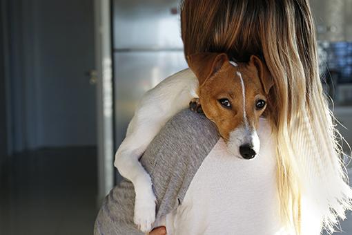 sintomas de diabetes em cachorro