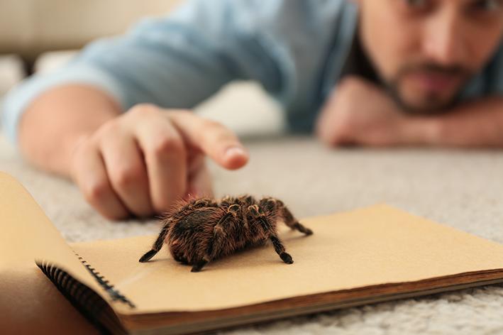 Aranha de estimação