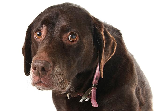 Arritmia cardíaca em cães
