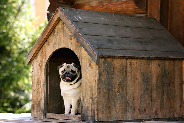 Casa de madeira para cães e gatos: o que você precisa saber