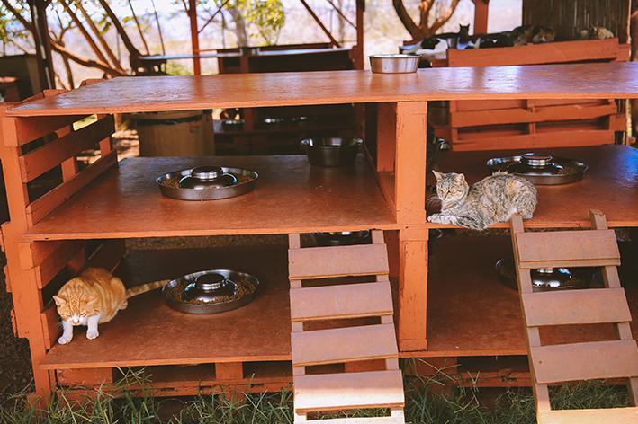 Cuidados com a casa de madeira do seu pet