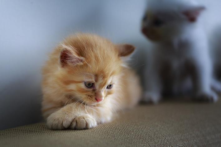 ansiedade de separação em gatos