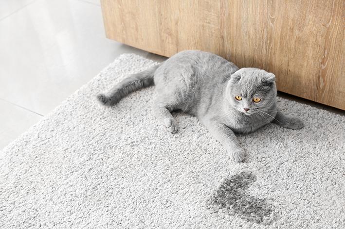 Como acontece a cistite em cães e gatos