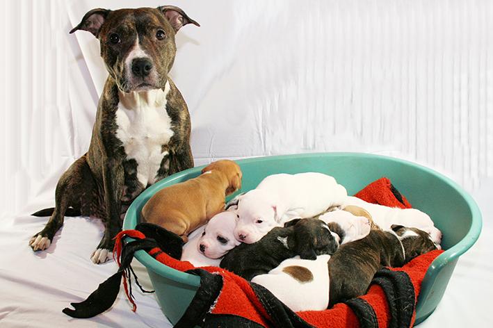 Cobertor para cachorro e a cachorra está grávida com filhotes