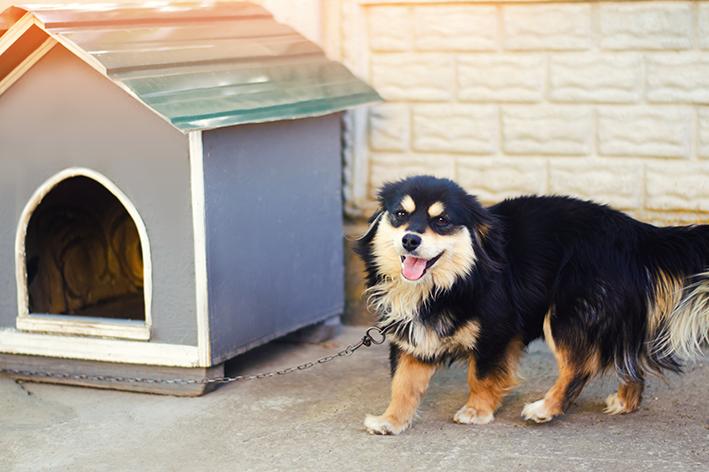 Como escolher a casinha de cachorro
