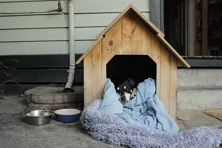 Conforto e higiene da casinha de cachorro são fundamentais