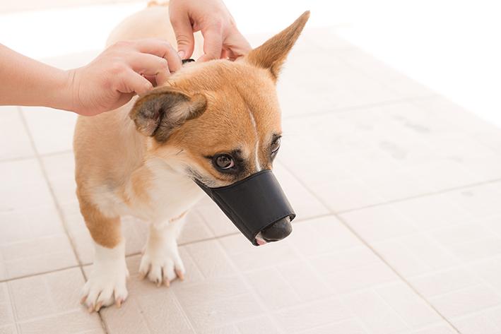 Cachorro com focinheira de PVC
