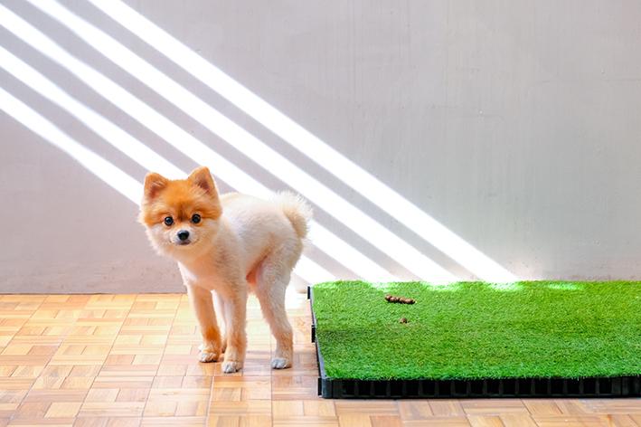 Grama sintética e outros modelos de banheiro higiênico para cachorro