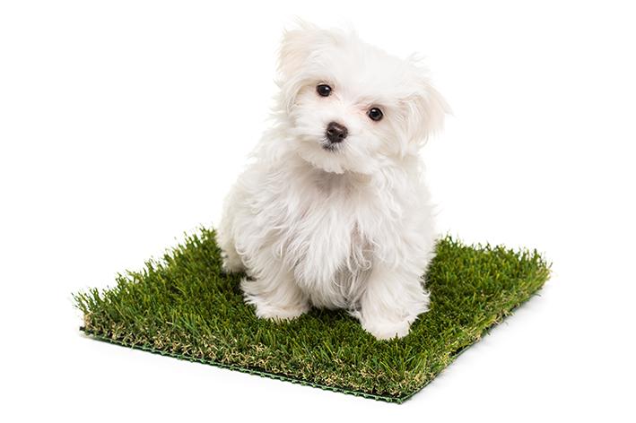 Grama sintética: um banheiro higiênico que seu cão vai adorar