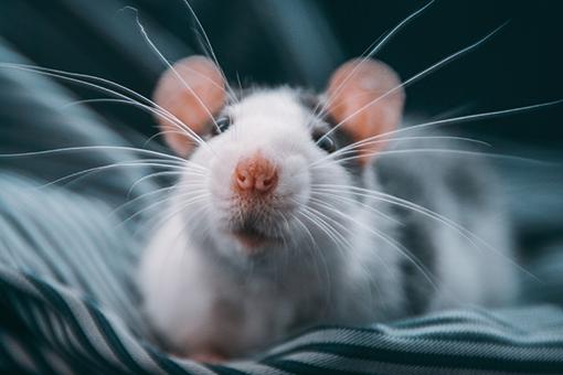 nomes de hamster divertidos