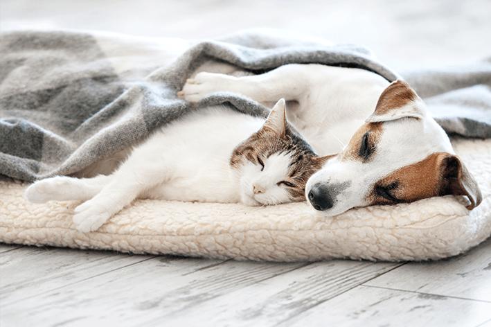 manta a aposta certa para uma boa soneca