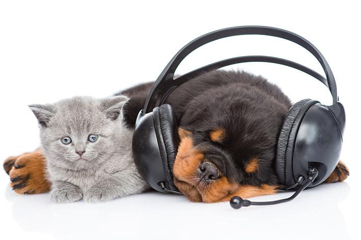 Musica para gato e cachorro
