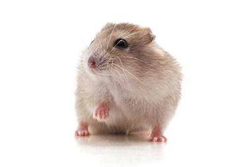 lista de nomes para hamster
