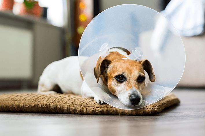 5 pomadas que não podem faltar no cuidado com seu pet