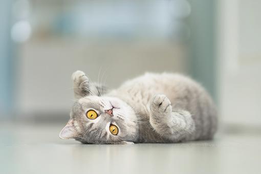 pet mostra que gato é o dono da casa