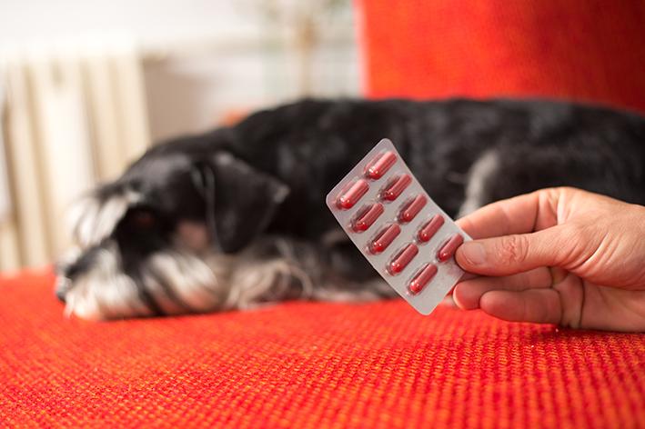 Qual é o melhor antibiótico para cachorro?