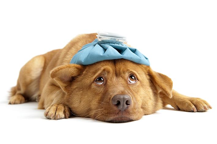 Tosse seca em cachorros: possíveis causas e o que fazer