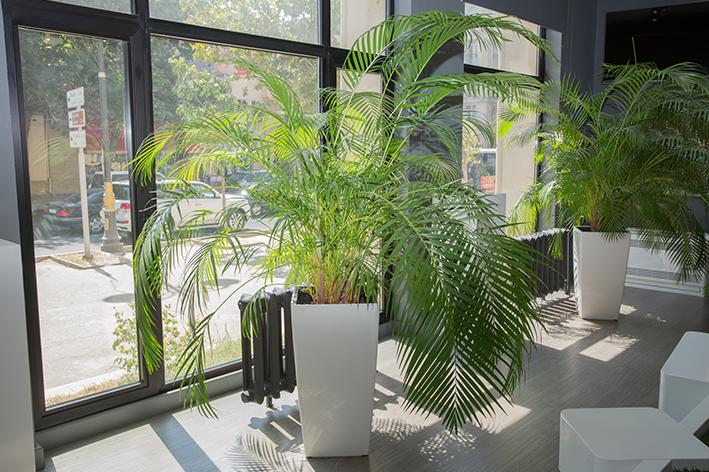 Como escolher um vaso de planta grande