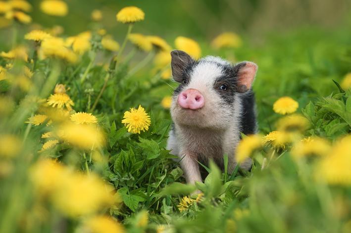Animais de estimação: cinco tipos diferentes que você precisa conhecer