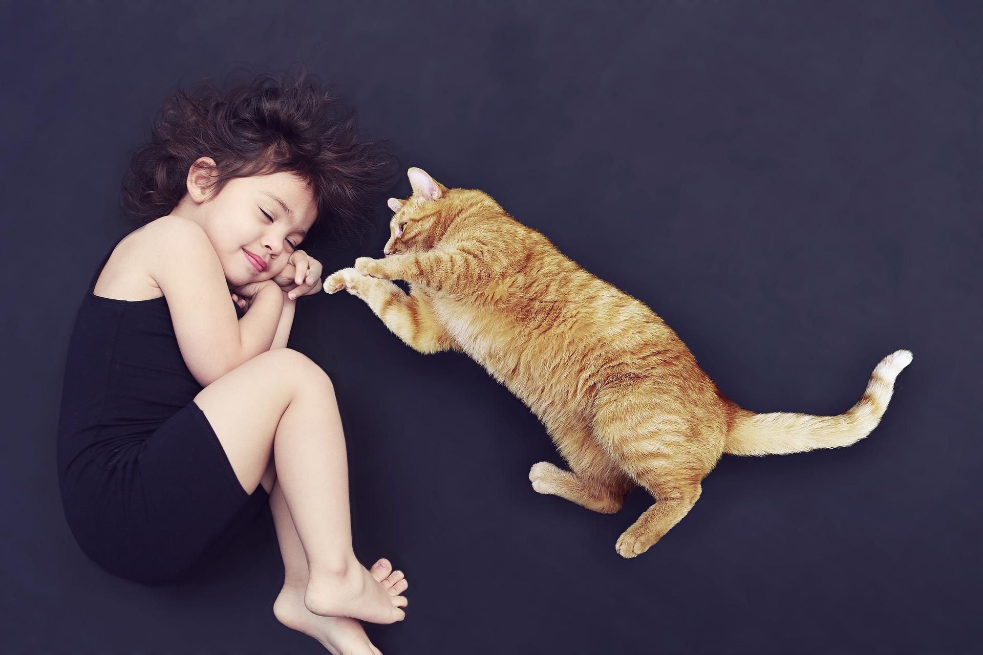 gato para criança