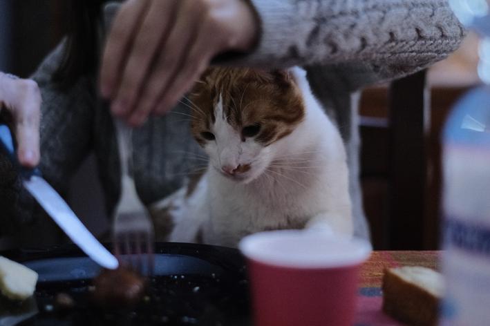 gato pode comer carne crua