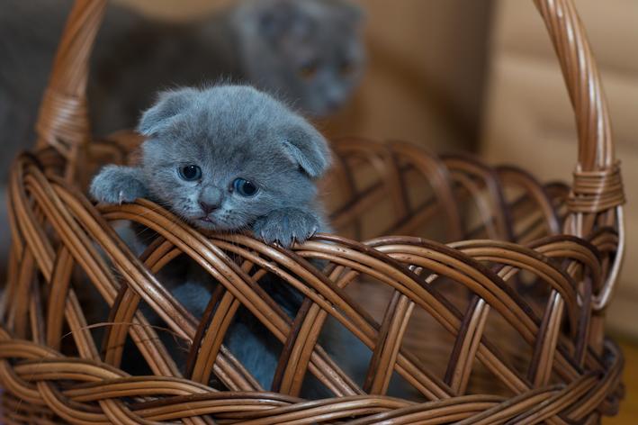 miado de gato filhote