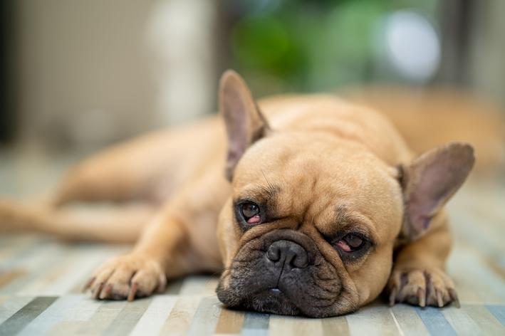 bolinha no olho do cachorro