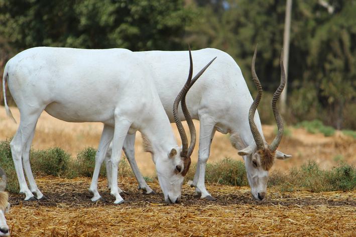 saiba mais sobre animais mais raros do mundo
