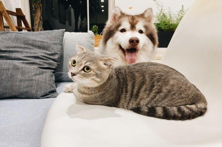 Amizade entre animais